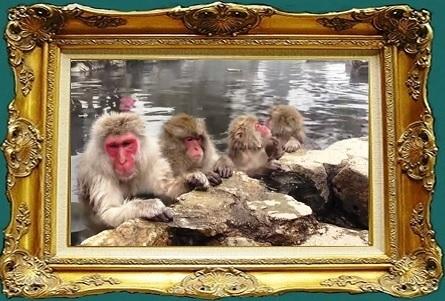 温泉猿.jpg
